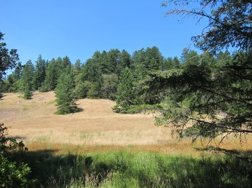 meadow in the forest