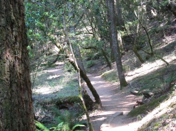 shady part of the trail