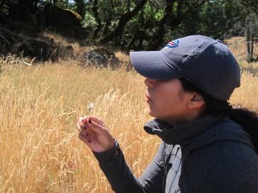 Andrea finds a dandelion